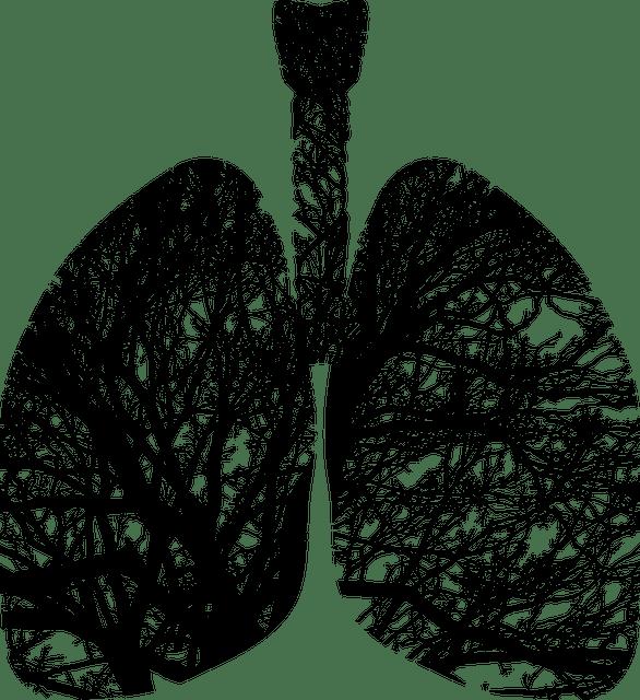 Un pulmón con árboles